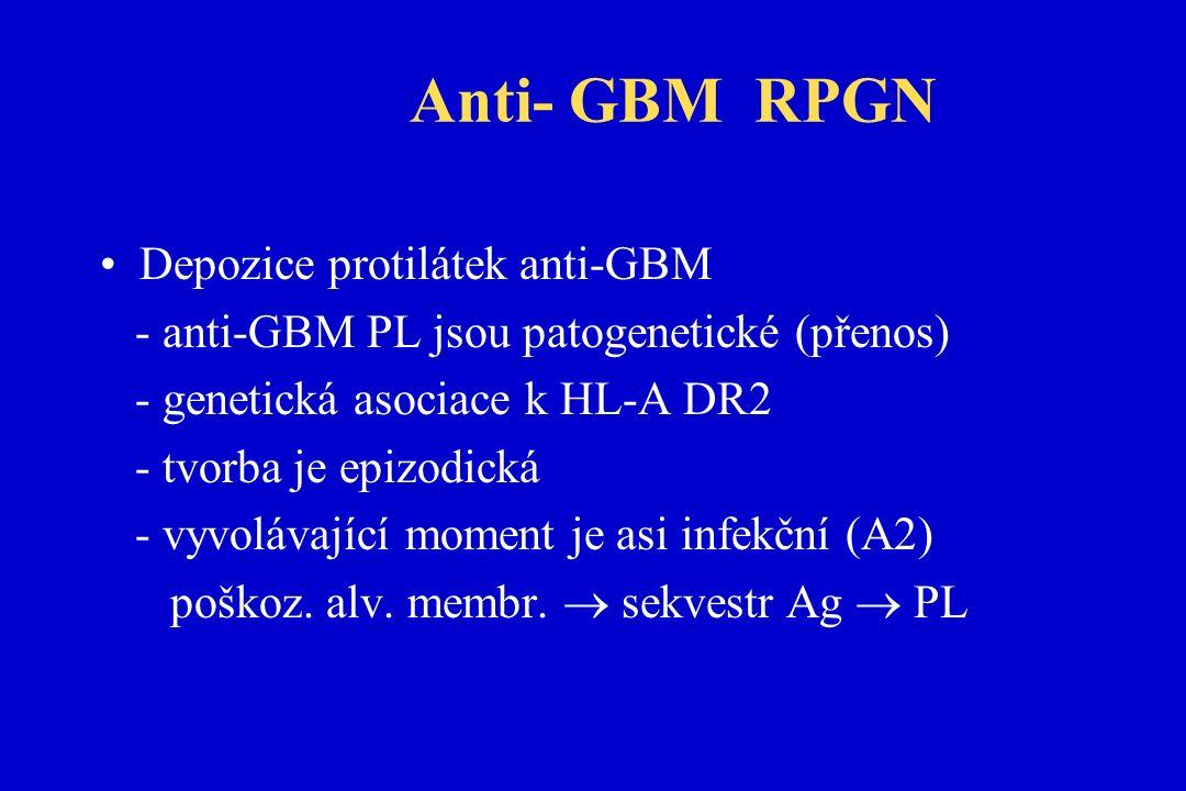 Anti- GBM RPGN Depozice protilátek anti-GBM - anti-GBM PL jsou patogenetické (přenos) - genetická asociace k HL-A DR2 - tvorba je epizodická - vyvolávající moment je asi infekční (A2) poškoz.