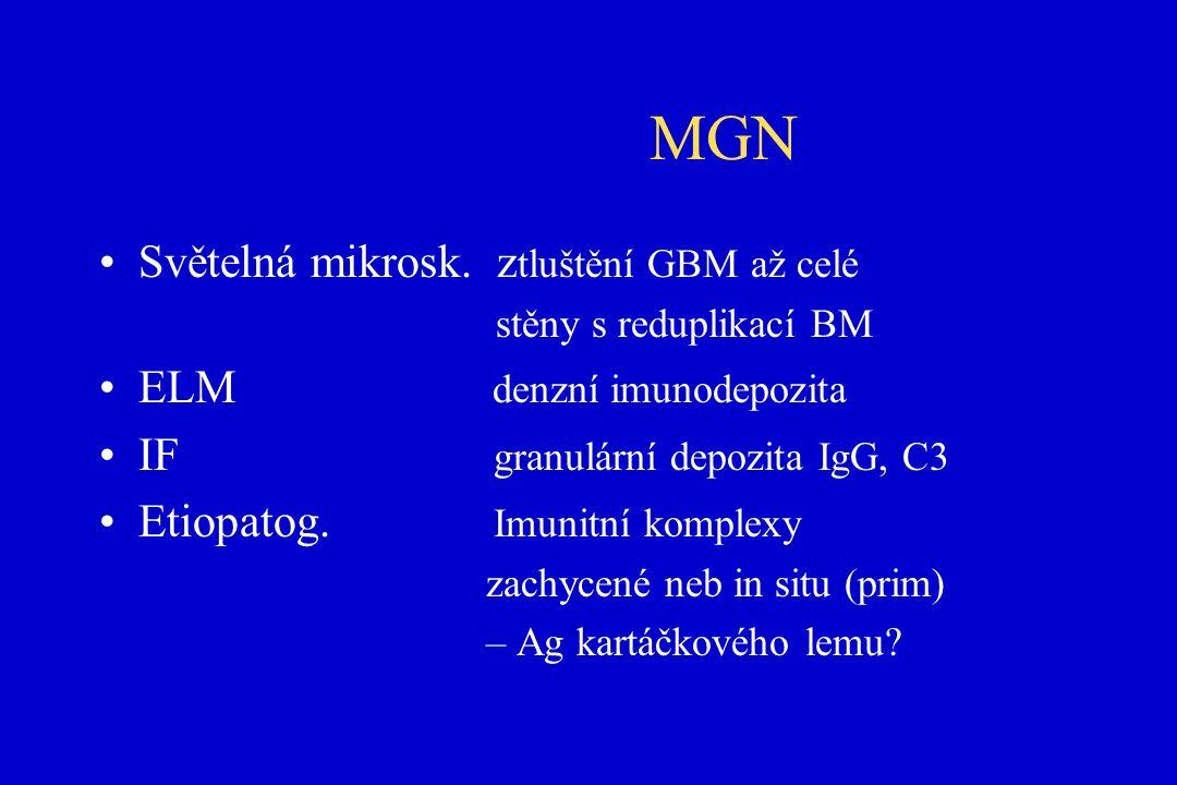 MGN Světelná mikrosk.