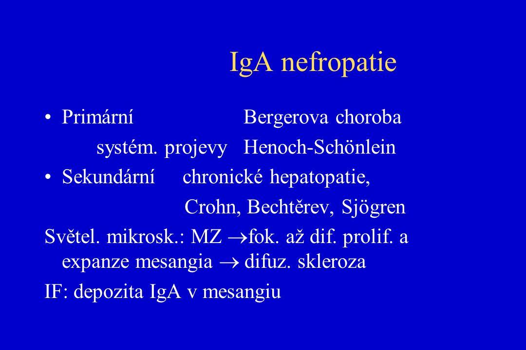 IgA nefropatie Primární Bergerova choroba systém.