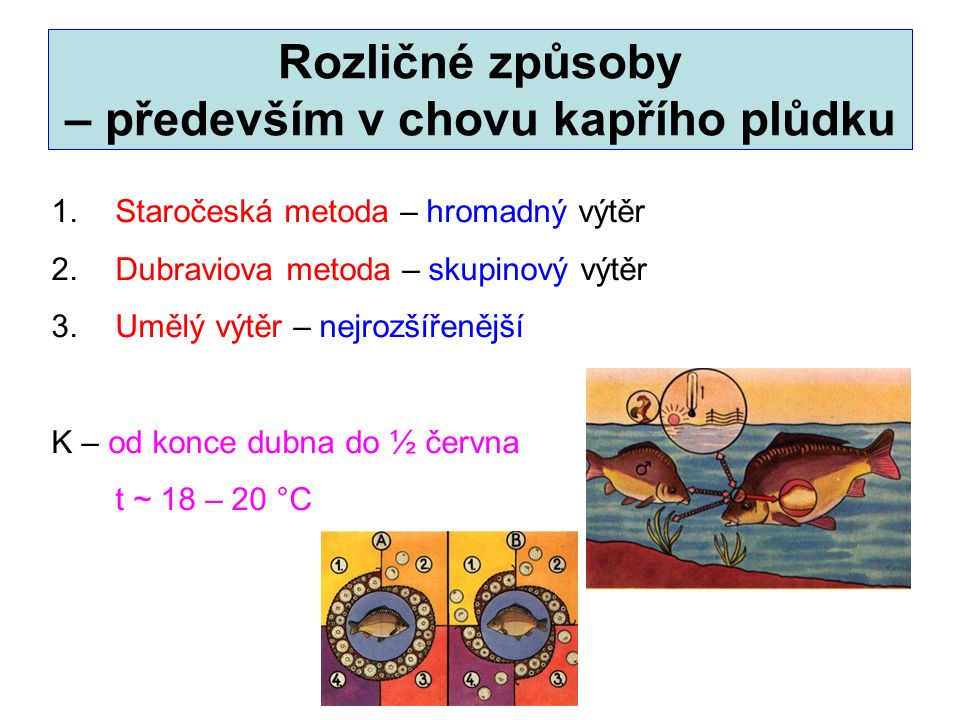 Rozličné způsoby – především v chovu kapřího plůdku 1.Staročeská metoda – hromadný výtěr 2.Dubraviova metoda – skupinový výtěr 3.Umělý výtěr – nejrozš