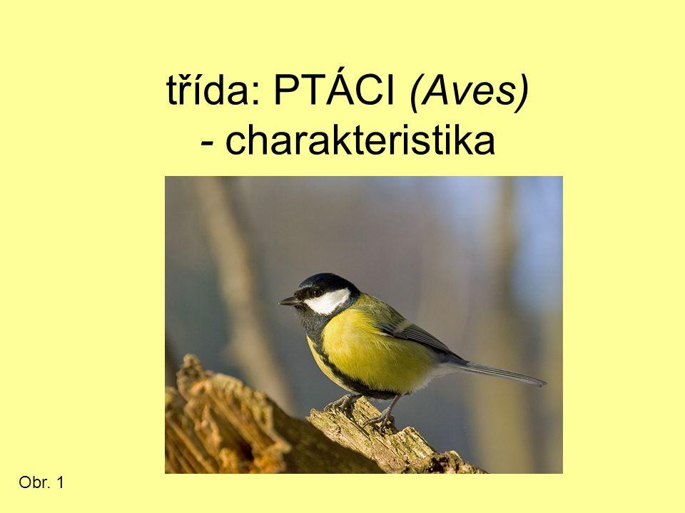 třída: PTÁCI (Aves) - charakteristika Obr. 1