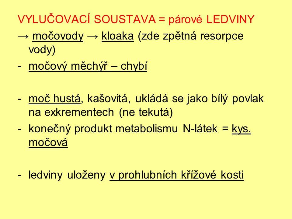 VYLUČOVACÍ SOUSTAVA = párové LEDVINY → močovody → kloaka (zde zpětná resorpce vody) -močový měchýř – chybí -moč hustá, kašovitá, ukládá se jako bílý povlak na exkrementech (ne tekutá) -konečný produkt metabolismu N-látek = kys.
