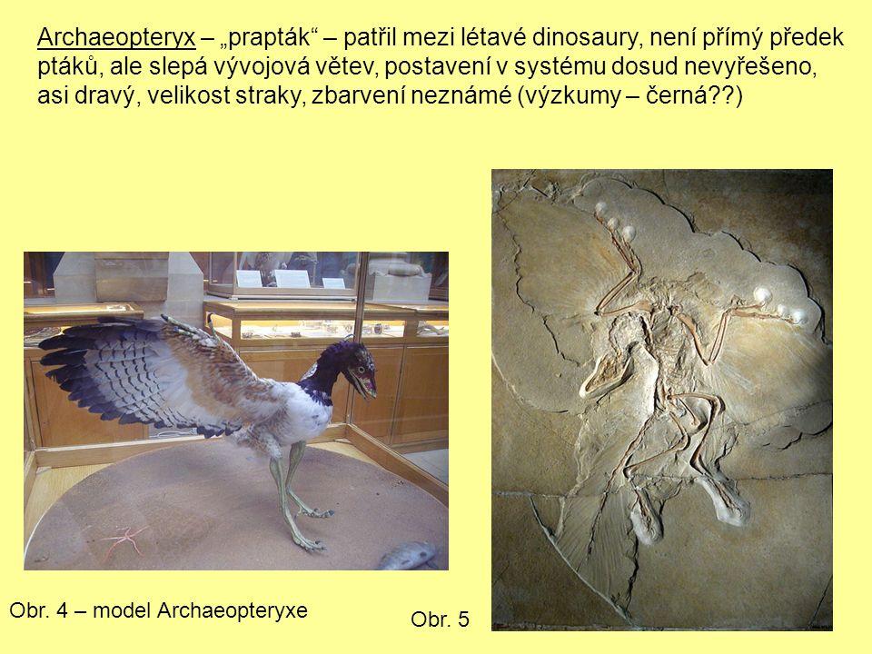 """Archaeopteryx – """"prapták – patřil mezi létavé dinosaury, není přímý předek ptáků, ale slepá vývojová větev, postavení v systému dosud nevyřešeno, asi dravý, velikost straky, zbarvení neznámé (výzkumy – černá ) Obr."""