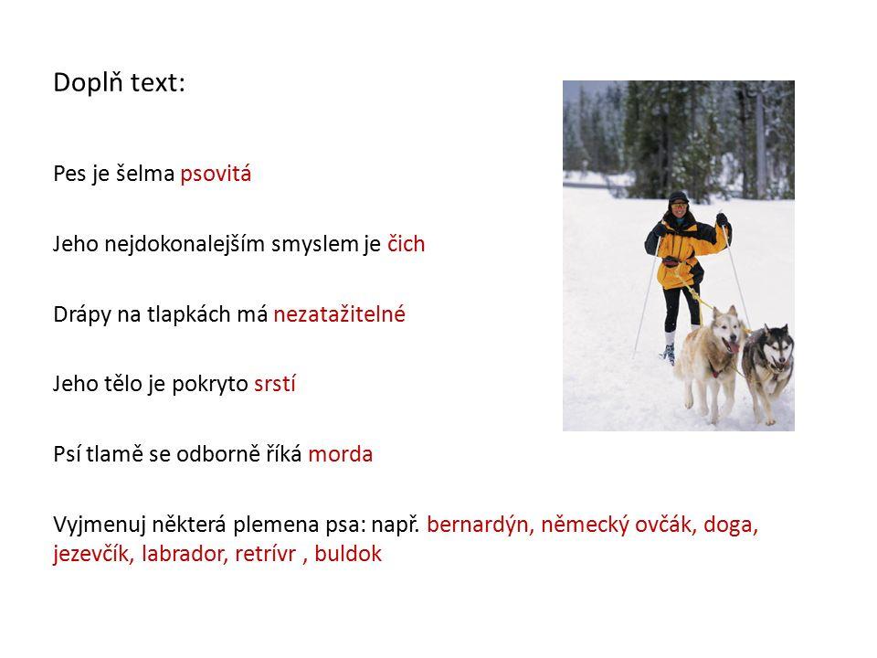 Doplň text: Pes je šelma psovitá Jeho nejdokonalejším smyslem je čich Drápy na tlapkách má nezatažitelné Jeho tělo je pokryto srstí Psí tlamě se odborně říká morda Vyjmenuj některá plemena psa: např.