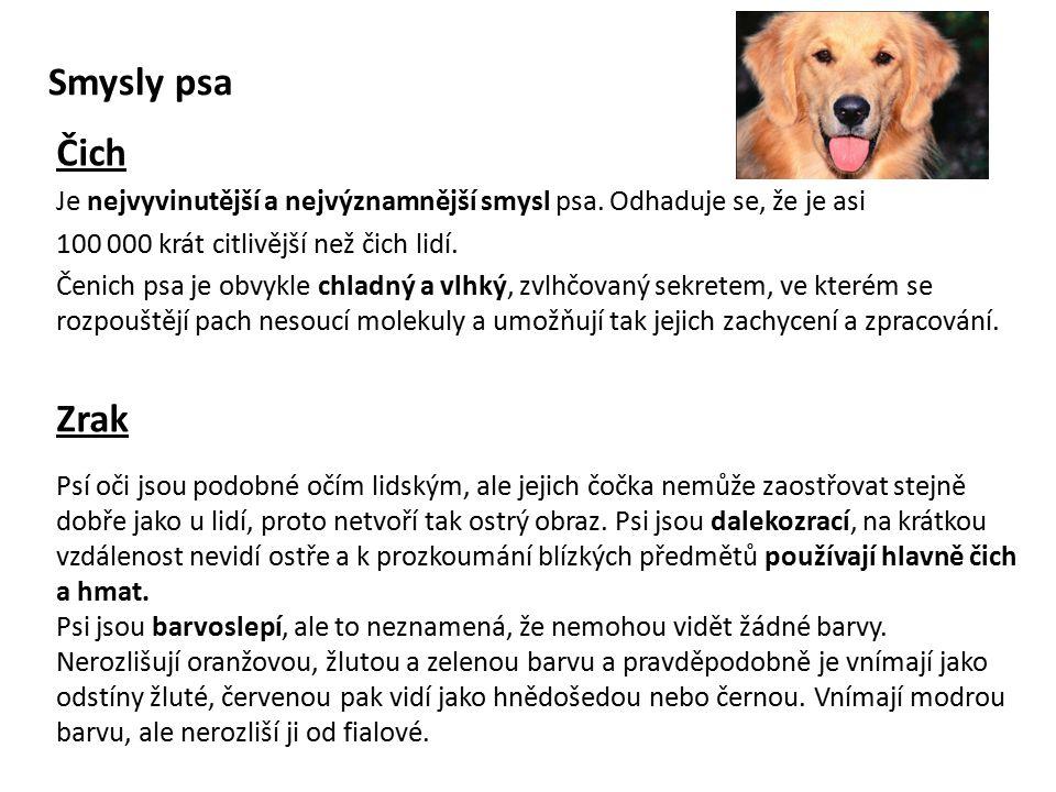 Smysly psa Čich Je nejvyvinutější a nejvýznamnější smysl psa.