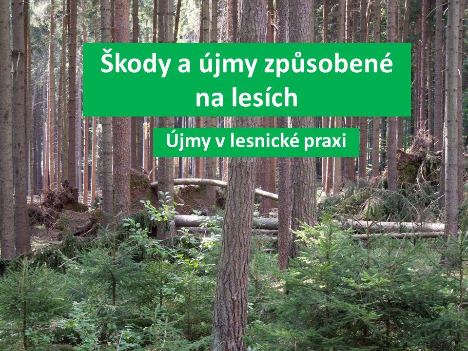 Škody a újmy způsobené na lesích Újmy v lesnické praxi