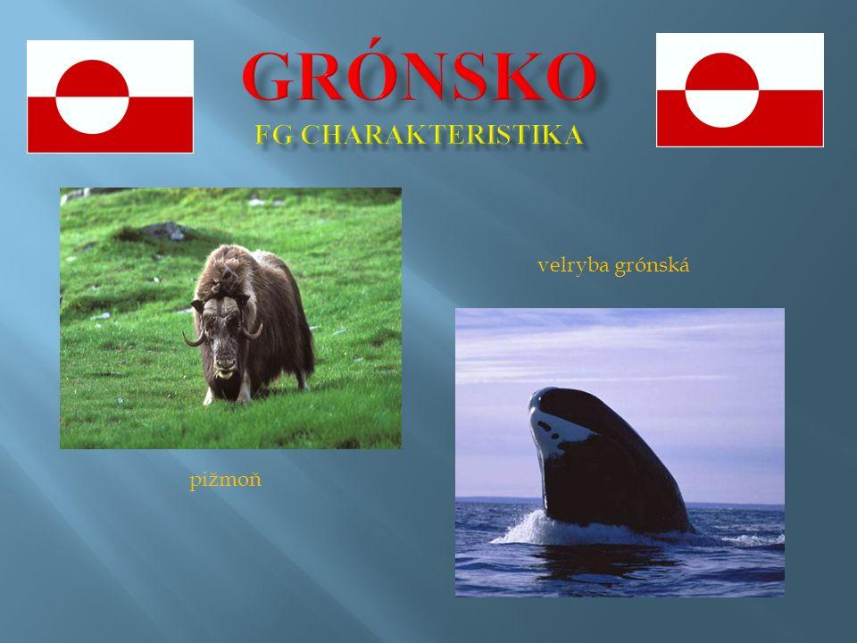 pižmoň velryba grónská