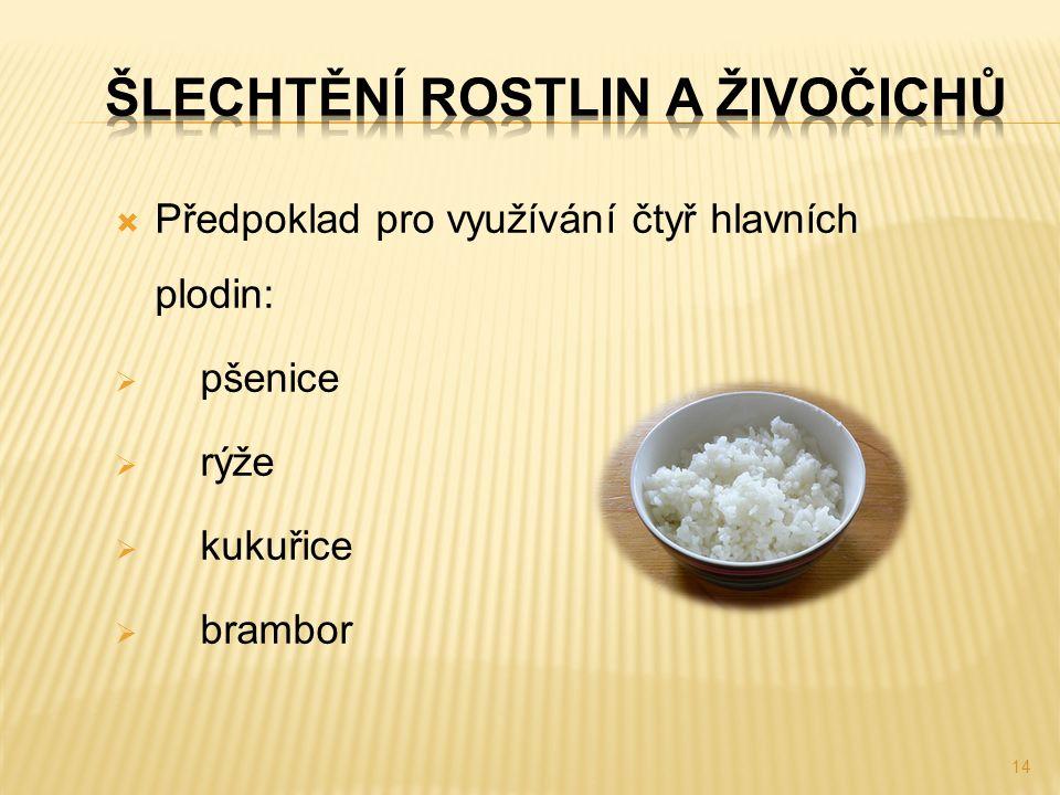  Předpoklad pro využívání čtyř hlavních plodin:  pšenice  rýže  kukuřice  brambor 14