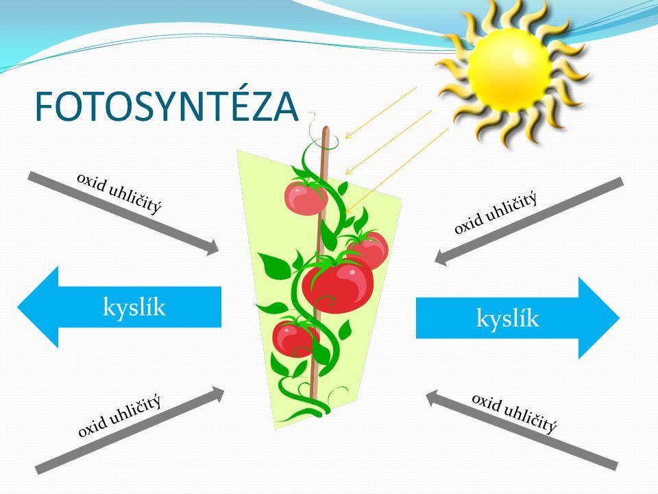 FOTOSYNTÉZA kyslík oxid uhličitý