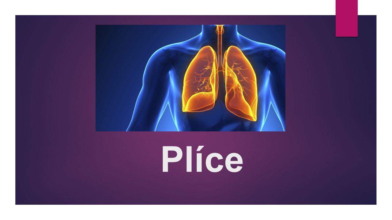 Stavba plicních váčků : PLÍCE JE PÁROVÝ ORGÁN, KTERÝ UMOŽŇUJE VÝMĚNU PLYNŮ.MEZI KRVÍ A VZDUCHEM.