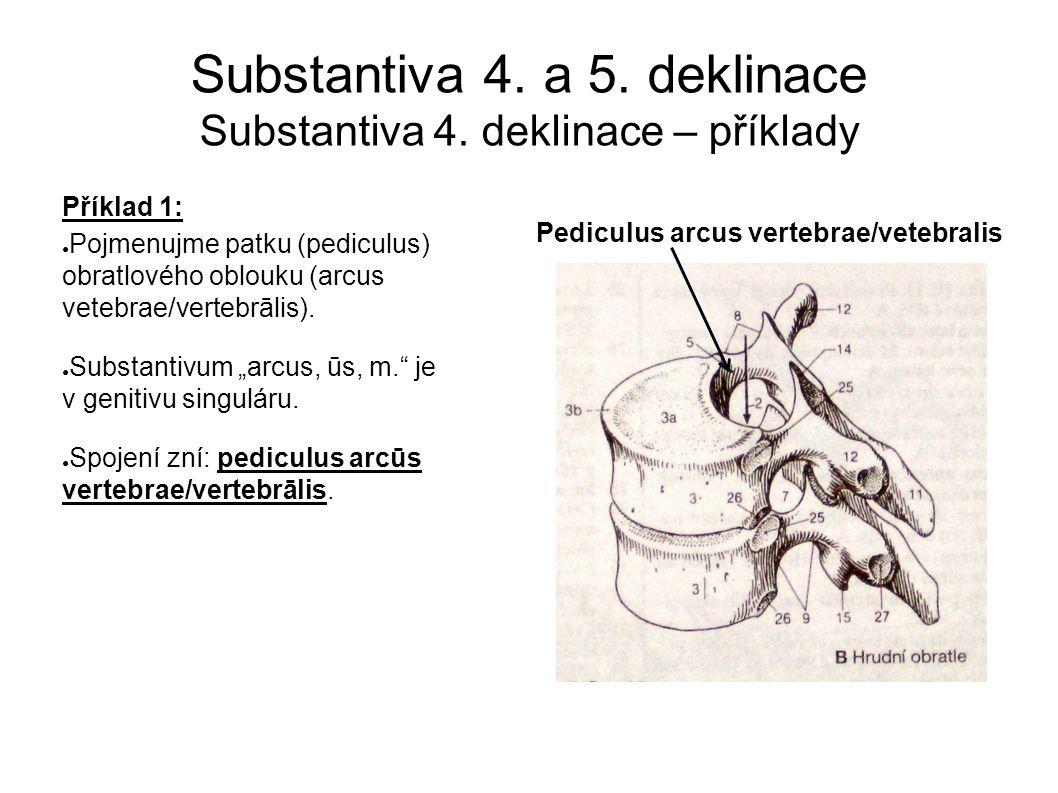 Substantiva 4. a 5. deklinace Substantiva 4.