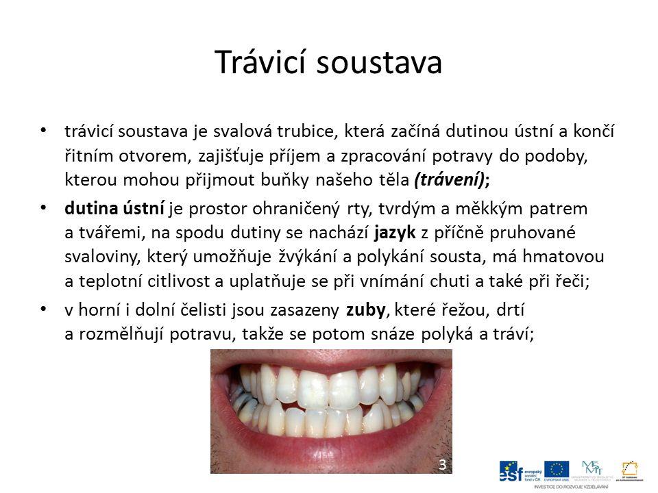 Trávicí soustava trávicí soustava je svalová trubice, která začíná dutinou ústní a končí řitním otvorem, zajišťuje příjem a zpracování potravy do podoby, kterou mohou přijmout buňky našeho těla (trávení); dutina ústní je prostor ohraničený rty, tvrdým a měkkým patrem a tvářemi, na spodu dutiny se nachází jazyk z příčně pruhované svaloviny, který umožňuje žvýkání a polykání sousta, má hmatovou a teplotní citlivost a uplatňuje se při vnímání chuti a také při řeči; v horní i dolní čelisti jsou zasazeny zuby, které řežou, drtí a rozmělňují potravu, takže se potom snáze polyká a tráví; 3