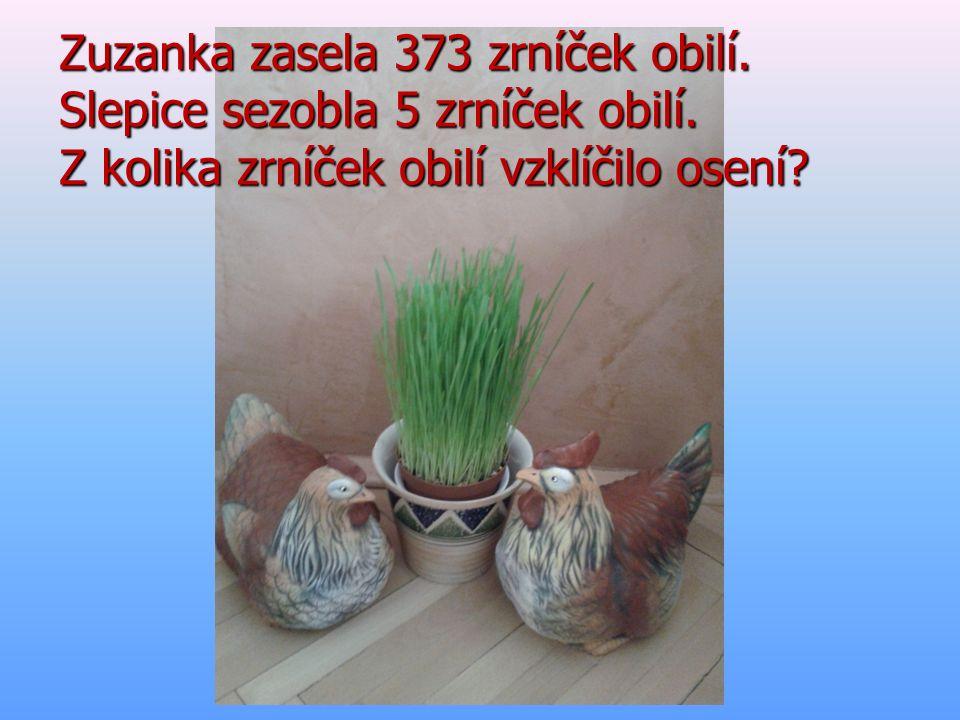 Zuzanka zasela 373 zrníček obilí. Slepice sezobla 5 zrníček obilí. Z kolika zrníček obilí vzklíčilo osení?
