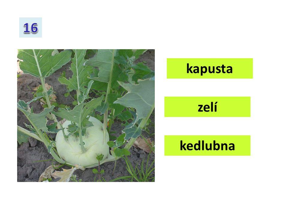kapusta brokolice zelí