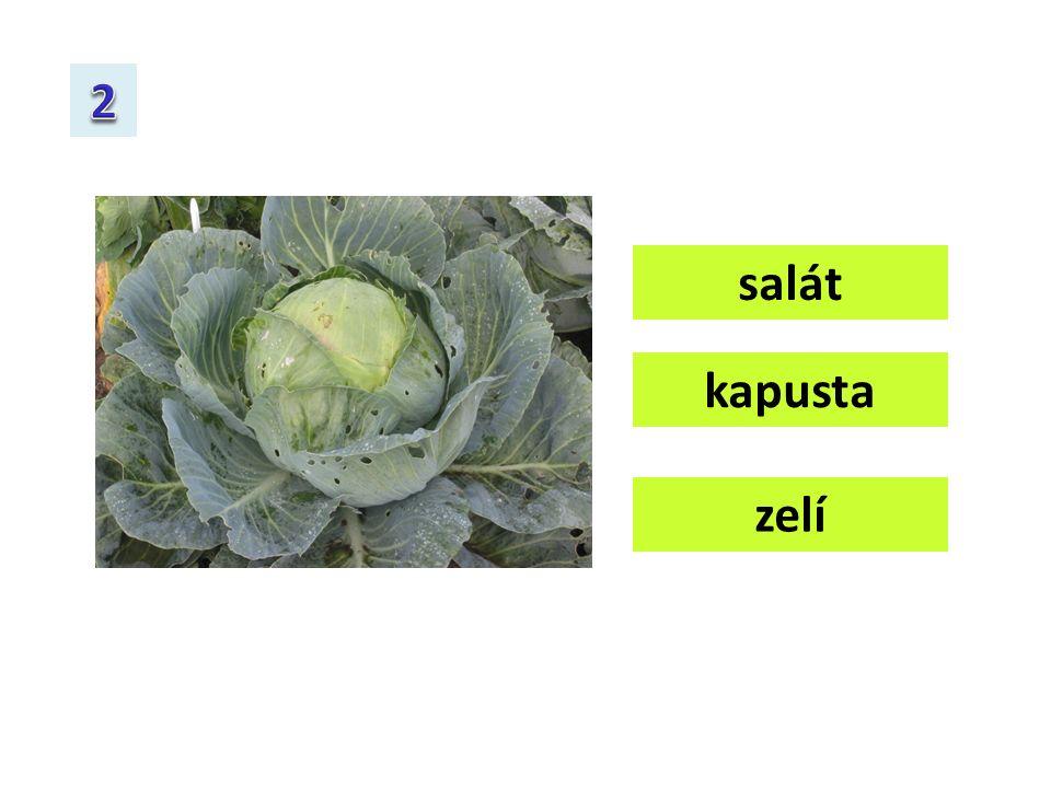 zelí salát kapusta
