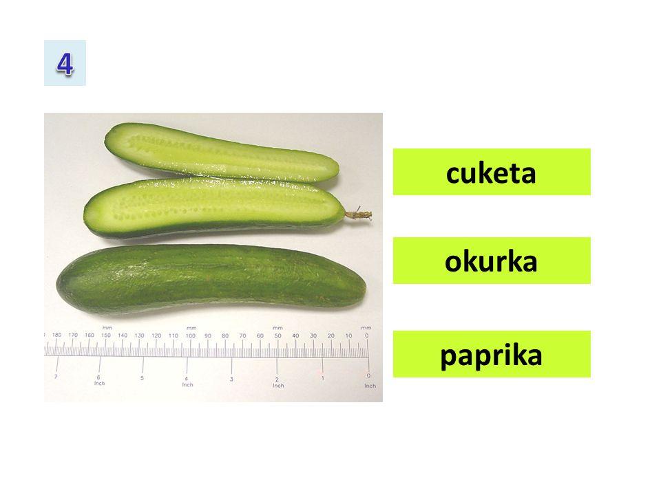 česnek celer cibule