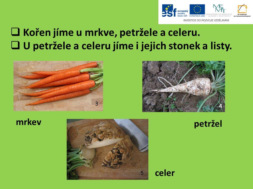  Kořen jíme u mrkve, petržele a celeru.  U petržele a celeru jíme i jejich stonek a listy.