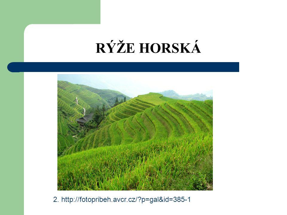 RÝŽE HORSKÁ 2. http://fotopribeh.avcr.cz/ p=gal&id=385-1