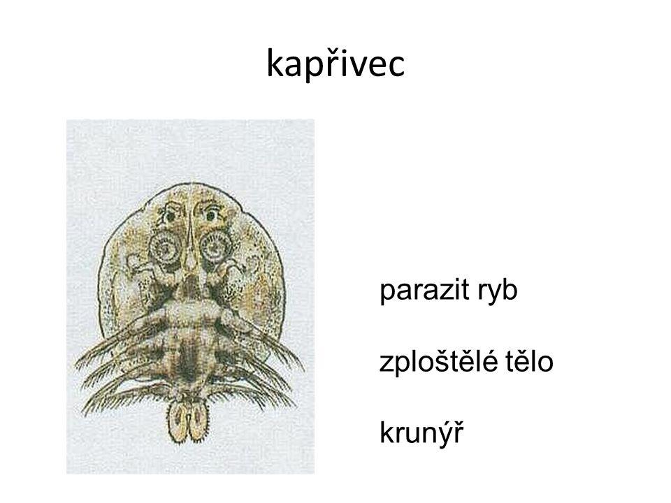 kapřivec parazit ryb zploštělé tělo krunýř
