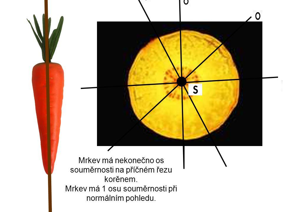 Mrkev má nekonečno os souměrnosti na příčném řezu korěnem.