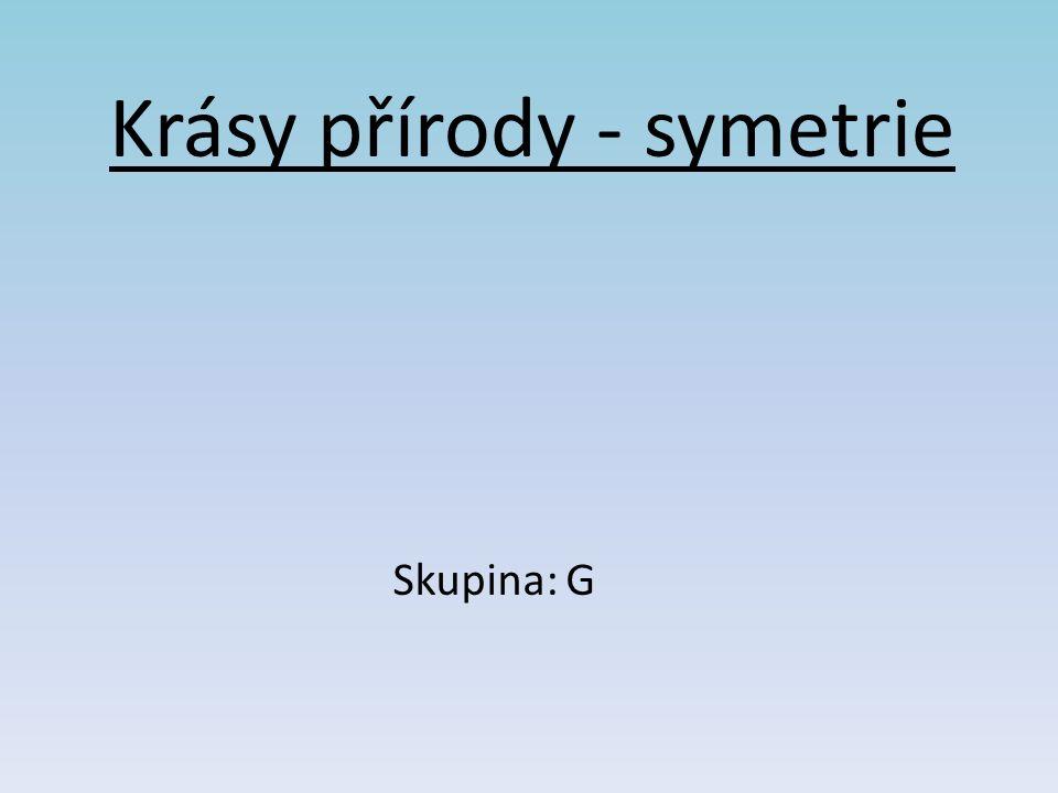 Krásy přírody - symetrie Skupina: G