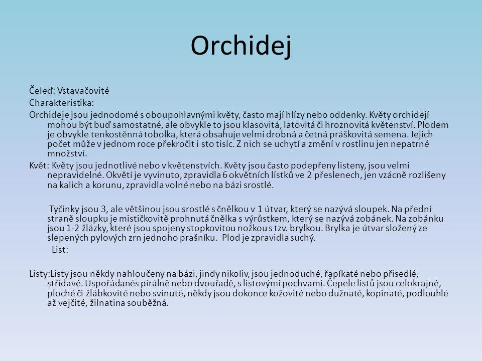 Čeleď: Vstavačovité Charakteristika: Orchideje jsou jednodomé s oboupohlavnými květy, často mají hlízy nebo oddenky.