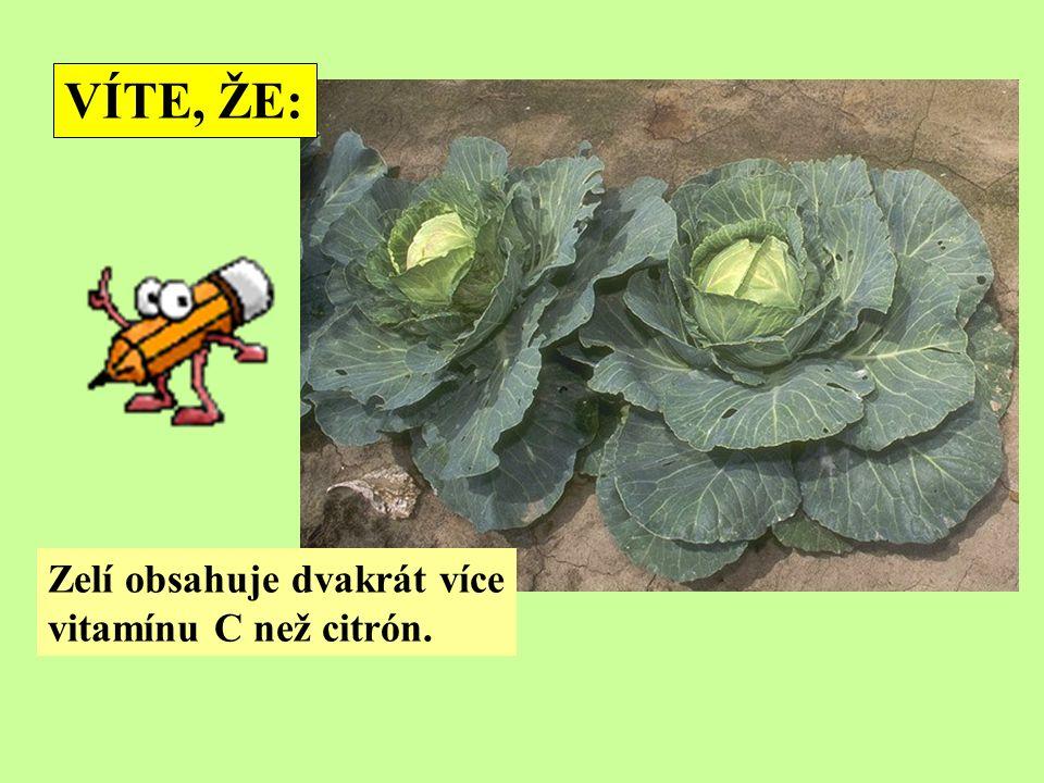 VÍTE, ŽE: Zelí obsahuje dvakrát více vitamínu C než citrón.