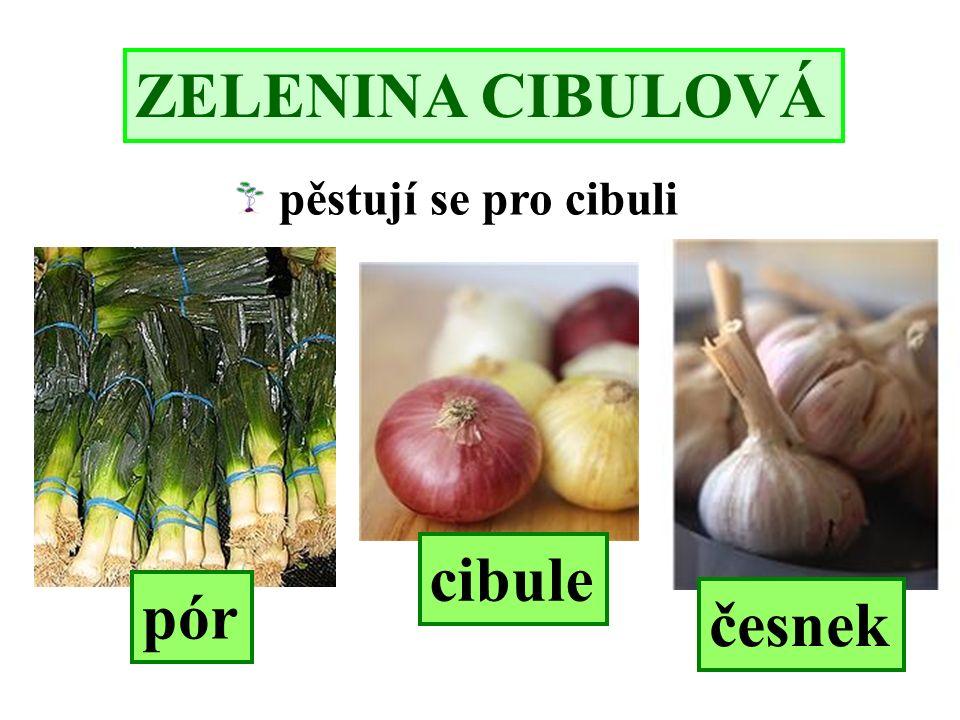 ZELENINA CIBULOVÁ pěstují se pro cibuli cibule česnek pór