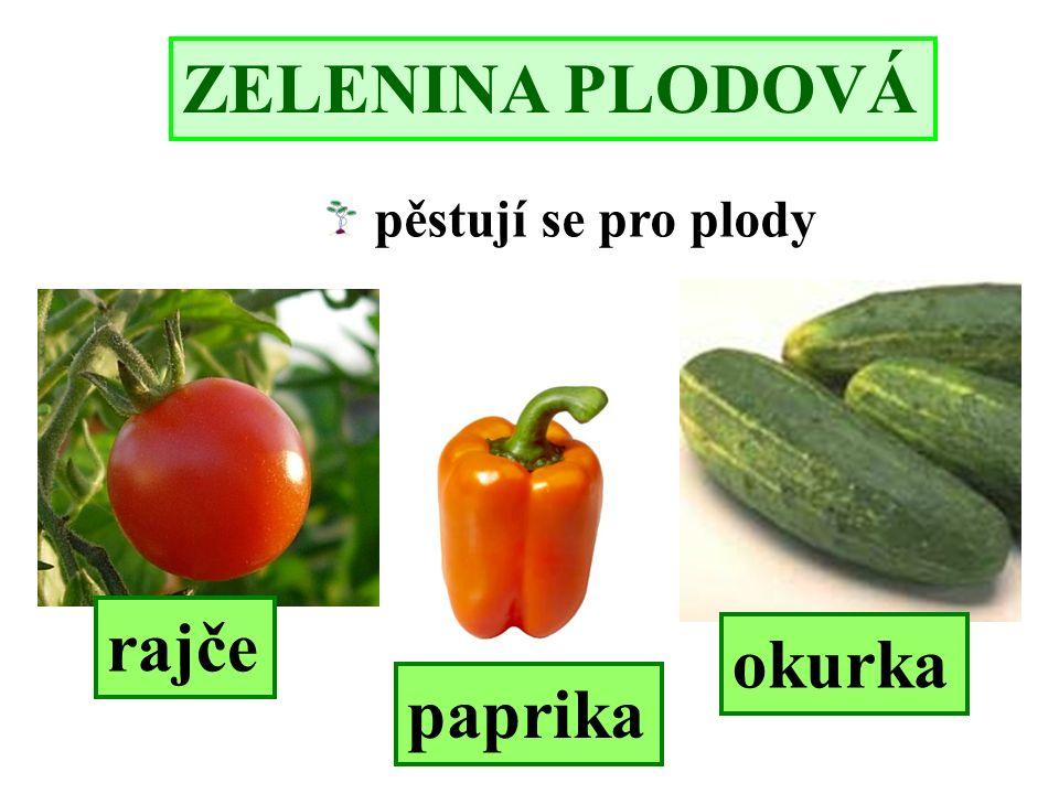 ZELENINA PLODOVÁ pěstují se pro plody rajče okurka paprika