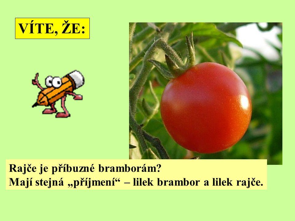 """Rajče je příbuzné bramborám Mají stejná """"příjmení – lilek brambor a lilek rajče. VÍTE, ŽE:"""