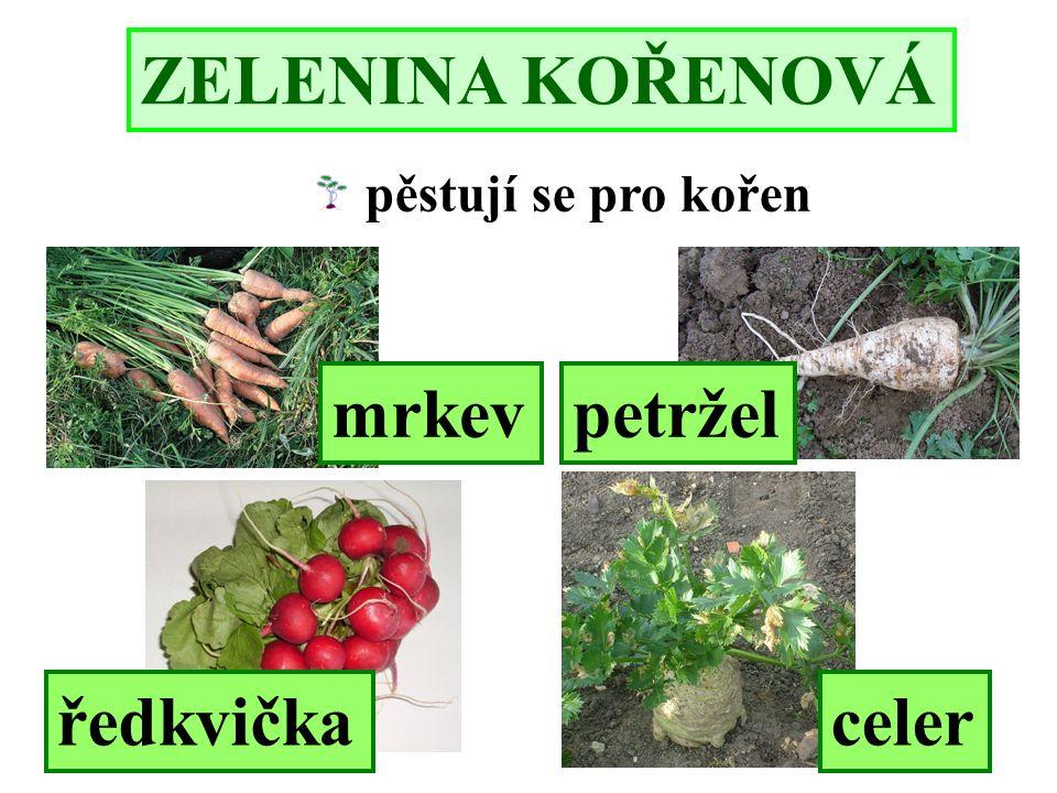 ZELENINA KOŘENOVÁ pěstují se pro kořen ředkvičkaceler mrkevpetržel