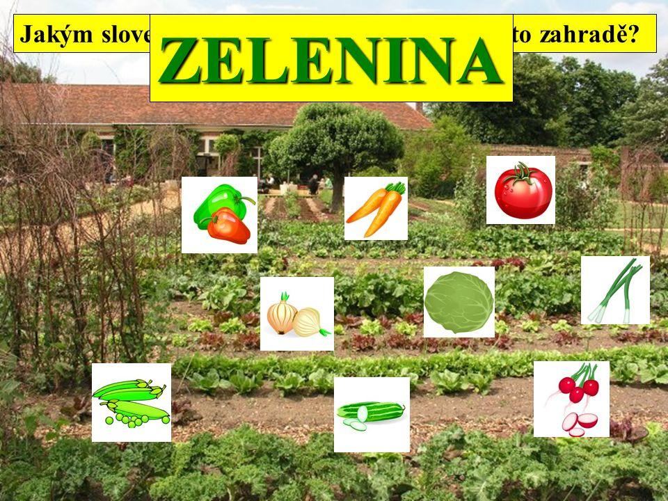 Jakým slovem označíš všechny rostliny na této zahradě ZELENINA