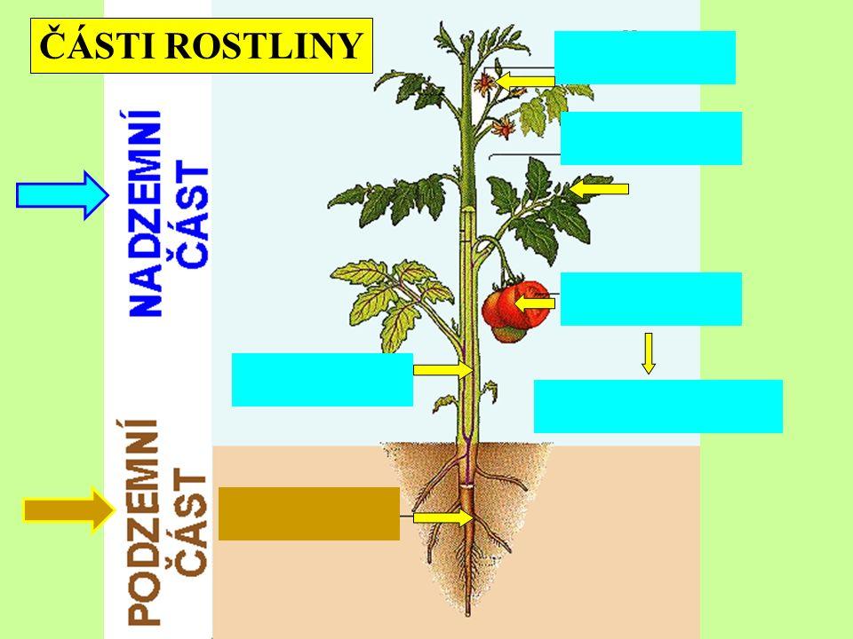 ČÁSTI ROSTLINY obsahuje semena