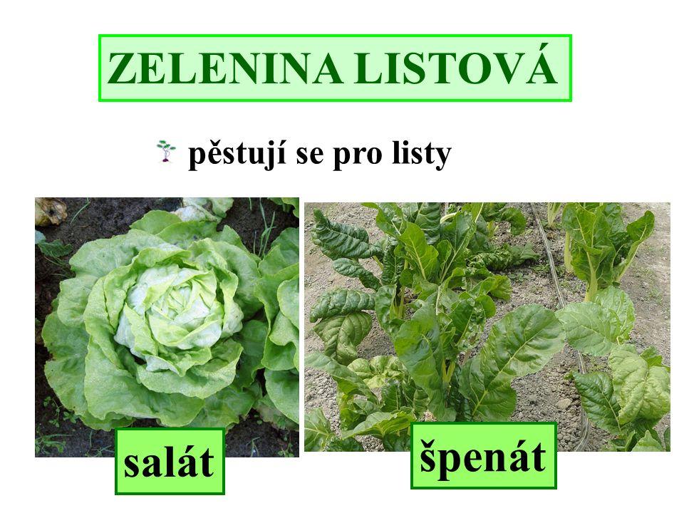 ZELENINA LISTOVÁ salát špenát pěstují se pro listy
