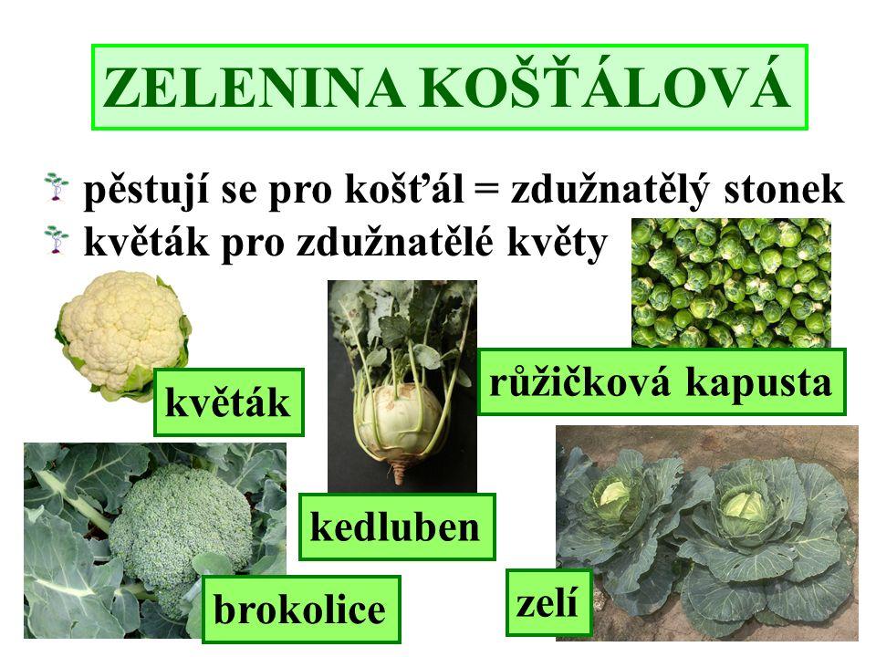 ZELENINA KOŠŤÁLOVÁ brokolice kedluben zelí květák růžičková kapusta pěstují se pro košťál = zdužnatělý stonek květák pro zdužnatělé květy