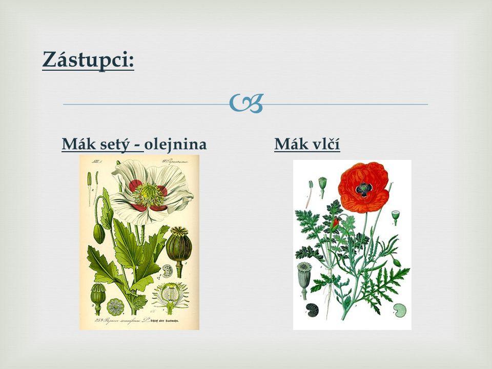  Charakteristické znaky: Byliny. Oboupohlavné květy opylované hmyzem nebo větrem.