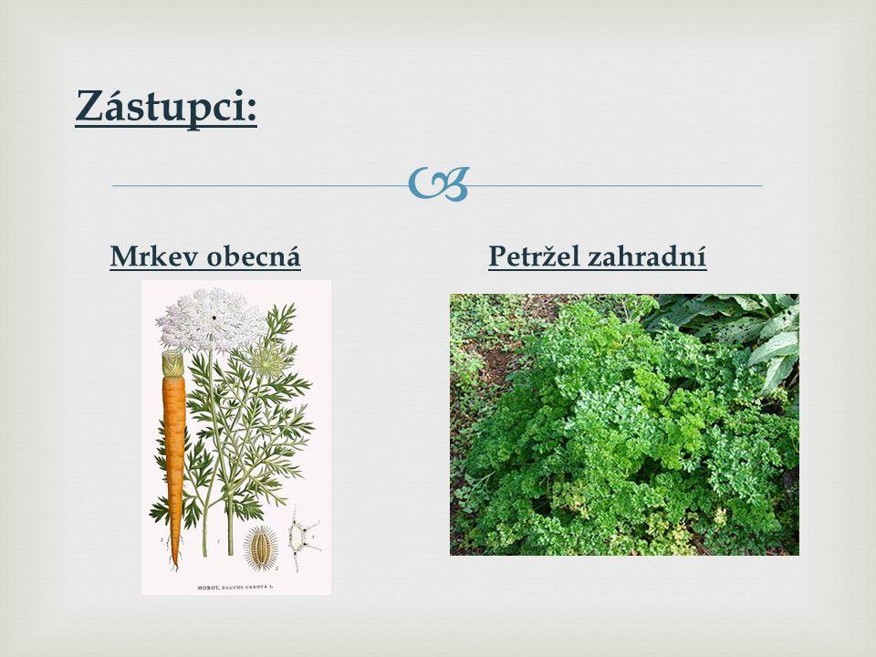   Jednoleté, dvouleté nebo vytrvalé byliny.