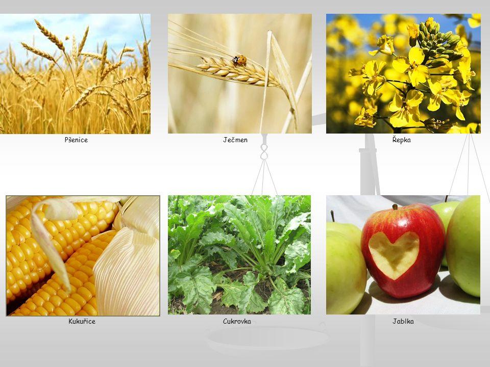 PšeniceJečmenŘepka KukuřiceCukrovkaJablka