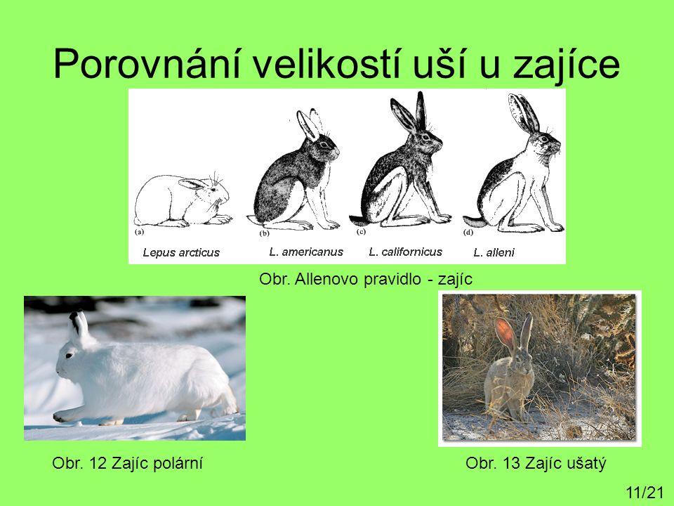 Porovnání velikostí uší u zajíce Obr. 12 Zajíc polárníObr. 13 Zajíc ušatý 11/21 Obr. Allenovo pravidlo - zajíc