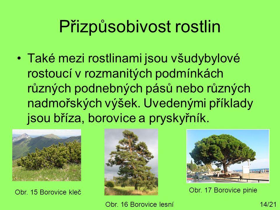 Přizpůsobivost rostlin Také mezi rostlinami jsou všudybylové rostoucí v rozmanitých podmínkách různých podnebných pásů nebo různých nadmořských výšek.