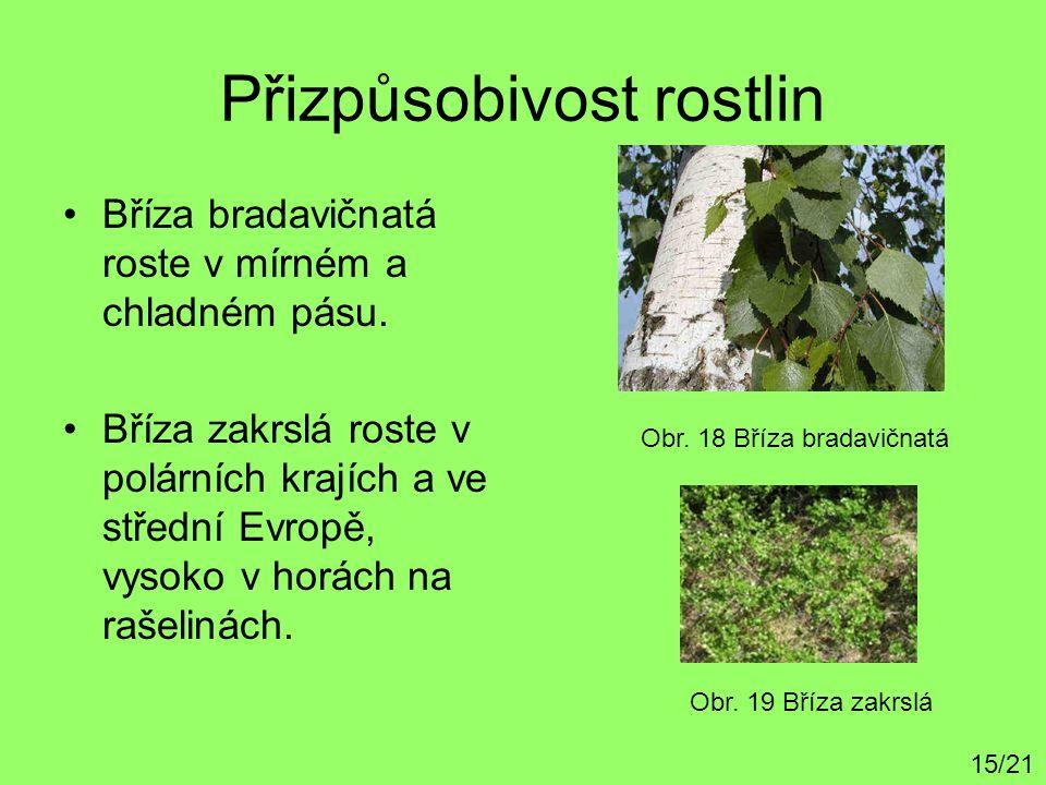 Přizpůsobivost rostlin Bříza bradavičnatá roste v mírném a chladném pásu. Bříza zakrslá roste v polárních krajích a ve střední Evropě, vysoko v horách