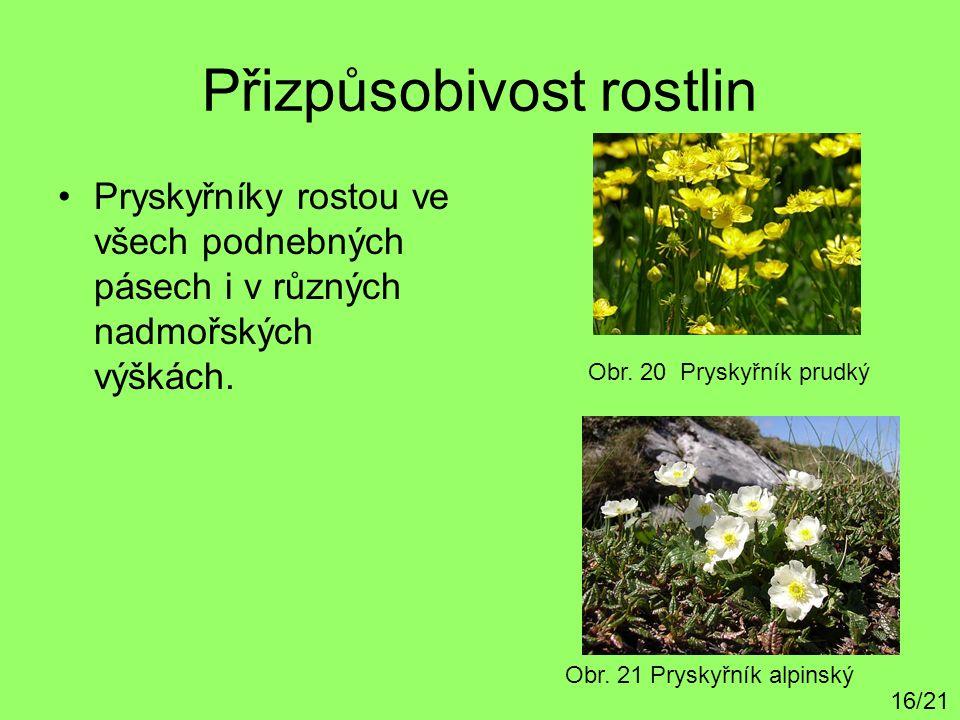 Přizpůsobivost rostlin Pryskyřníky rostou ve všech podnebných pásech i v různých nadmořských výškách. Obr. 20 Pryskyřník prudký Obr. 21 Pryskyřník alp