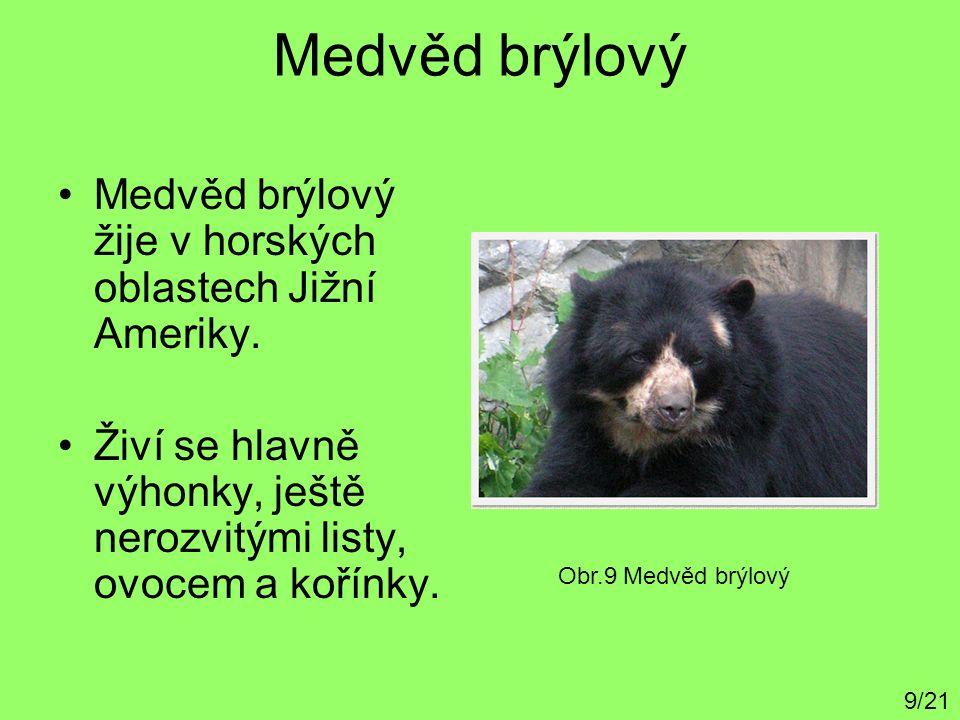 Medvěd brýlový Medvěd brýlový žije v horských oblastech Jižní Ameriky. Živí se hlavně výhonky, ještě nerozvitými listy, ovocem a kořínky. 9/21 Obr.9 M