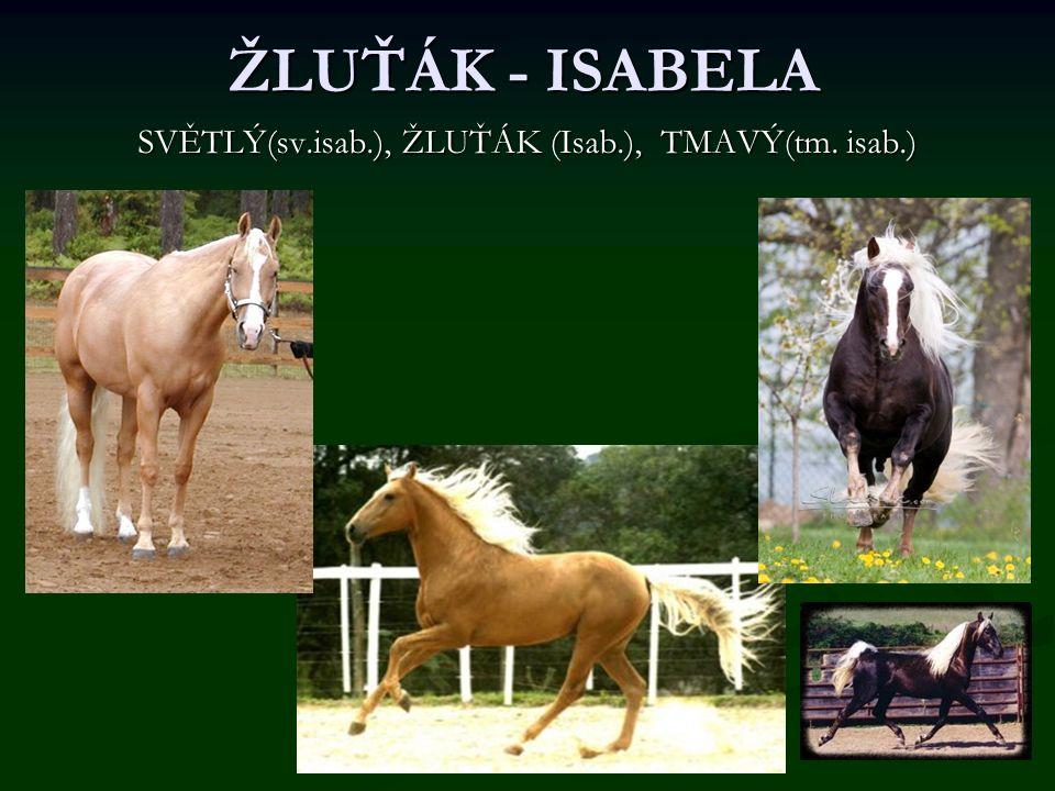 ŽLUŤÁK - ISABELA SVĚTLÝ(sv.isab.), ŽLUŤÁK (Isab.), TMAVÝ(tm. isab.)