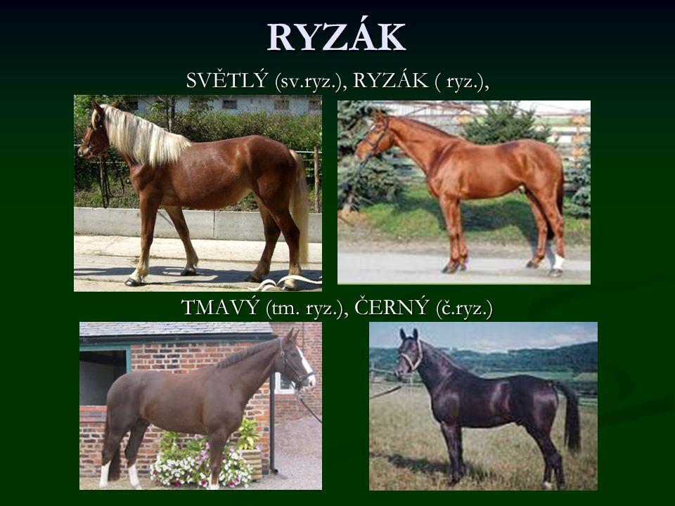 RYZÁK SVĚTLÝ (sv.ryz.), RYZÁK ( ryz.), TMAVÝ (tm. ryz.), ČERNÝ (č.ryz.)