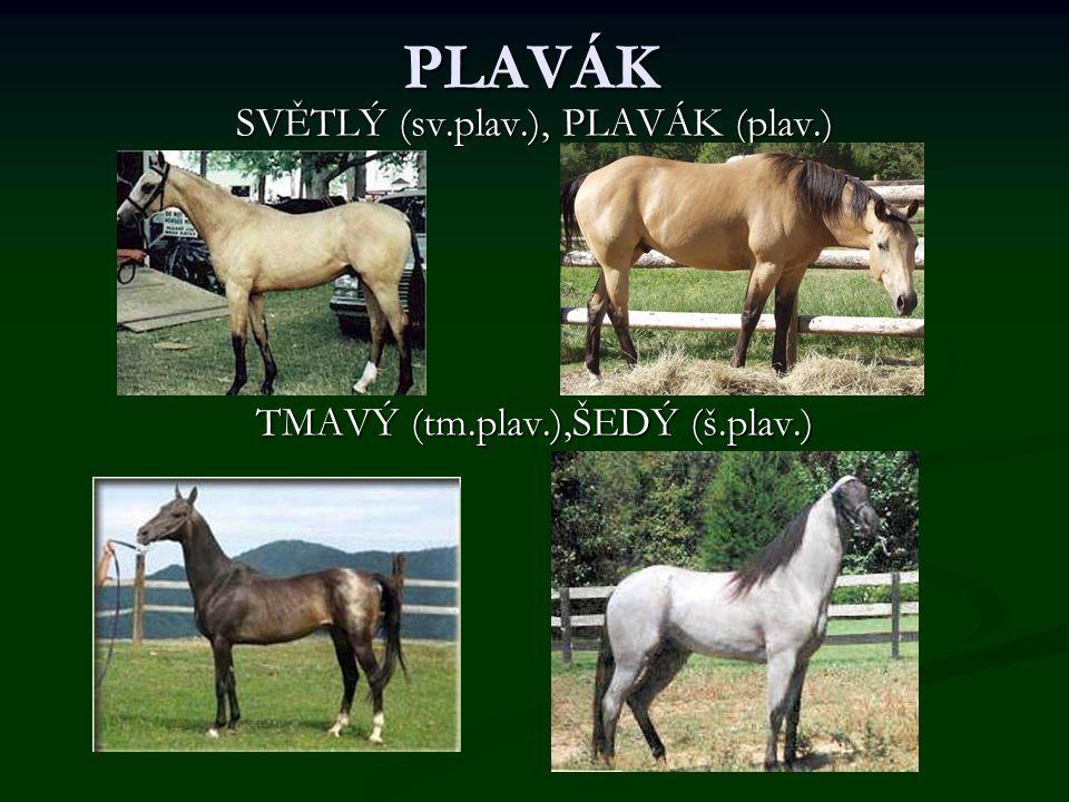 PLAVÁK SVĚTLÝ (sv.plav.), PLAVÁK (plav.) TMAVÝ (tm.plav.),ŠEDÝ (š.plav.)