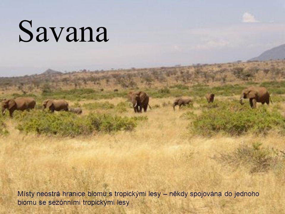 Savana Místy neostrá hranice biomu s tropickými lesy – někdy spojována do jednoho biomu se sezónními tropickými lesy