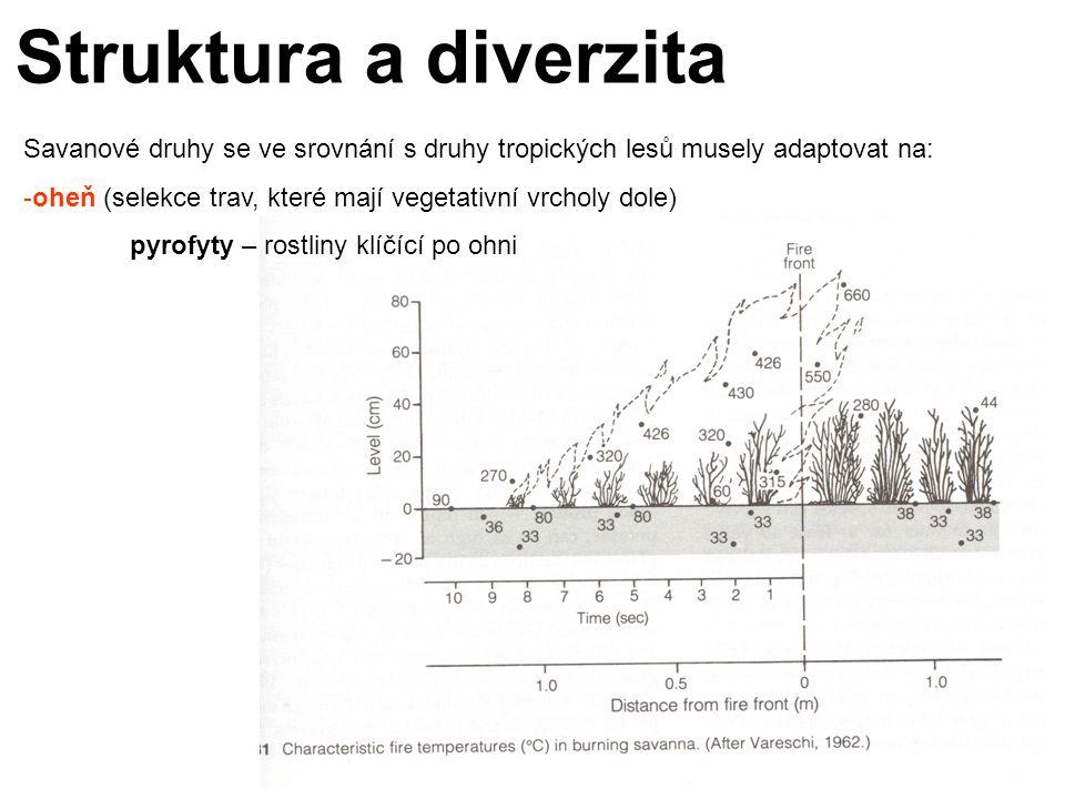 Struktura a diverzita Savanové druhy se ve srovnání s druhy tropických lesů musely adaptovat na: -oheň (selekce trav, které mají vegetativní vrcholy dole) pyrofyty – rostliny klíčící po ohni
