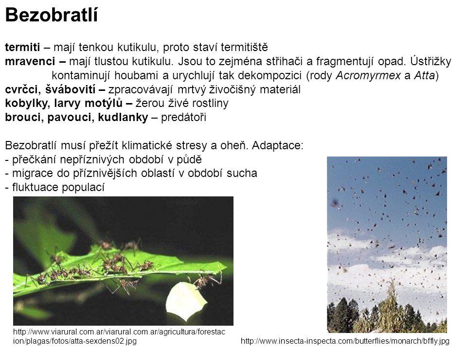 Bezobratlí termiti – mají tenkou kutikulu, proto staví termitiště mravenci – mají tlustou kutikulu.