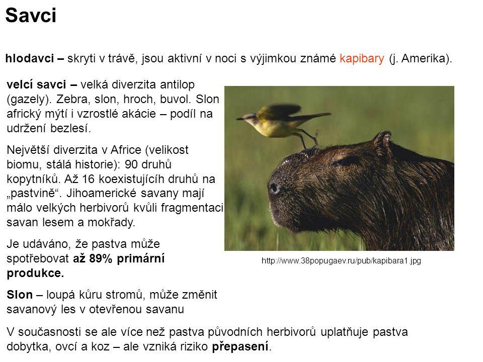 Savci hlodavci – skryti v trávě, jsou aktivní v noci s výjimkou známé kapibary (j.